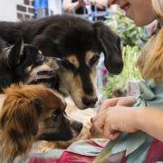 Hunde kennen Eifersucht (Foto)