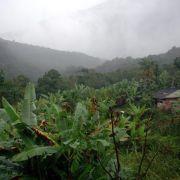Studie: Gemeinschaftswälder besser vor Abholzung geschützt (Foto)