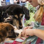 Studie: Hunde kennen Eifersucht (Foto)