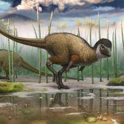 Alle Dinosaurier hatten vermutlich Federn (Foto)
