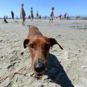 Pinzette und Zeckenmittel: Reiseapotheke für den Hund (Foto)