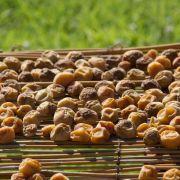 Vogelfutter aus getrockneten Früchten selbermachen (Foto)