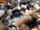Die ermordeten Hunde in Bali werden auf einen Haufen gelegt. (Foto)