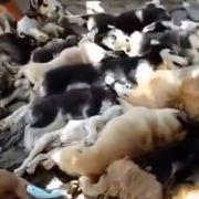 Die ermordeten Hunde in Bali werden auf einen Haufen gelegt.