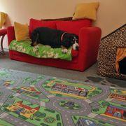 Tagesbetreuung für Hunde - Hutas sind im Kommen (Foto)