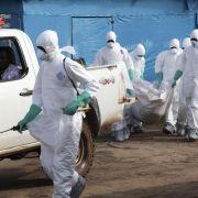Ebola in Westafrika könnte von Flughunden gekommen sein (Foto)