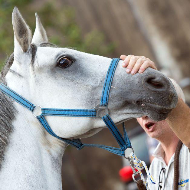 Tierarzt gesteht Sex mit Pferd und Hund (Foto)