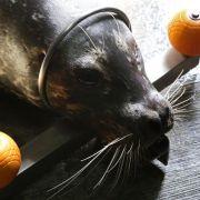 Forschen mit Robben in Warnemünde (Foto)