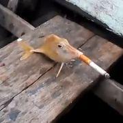 Tierquälerei? Dieser Fisch zieht sich erst einmal eine Zigarette rein.