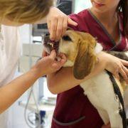 So finden Sie den besten Tierarzt (Foto)