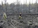 Schwedische Wälder könnten bis zum Herbst weiterbrennen (Foto)