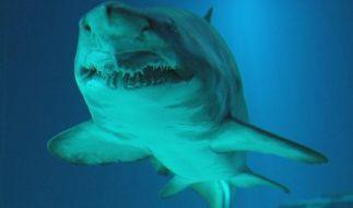 Knapp dem Tod entrungen: Bei einer Haiattacke verlor ein Kampfschimmer Hand und Bein. (Foto)