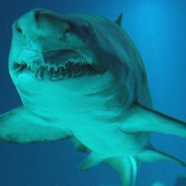 Riesiger Hai reißt Kampfschwimmer Hand und Bein ab (Foto)