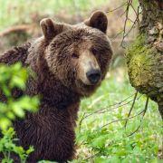 3-Jährige überlebt trotz Bären und Wölfen (Foto)