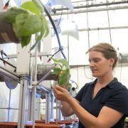 Durchgedrehte Pflanzen erobern die Horizontale (Foto)