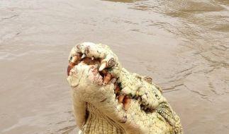 Ein solcher Alligator riss einen Australier in die Tiefe und zerfleischte ihn. (Foto)