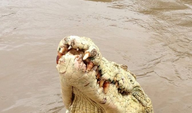 Tödlicher Krokodil-Angriff