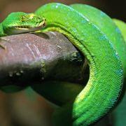 Schlangen klettern mit hohem Energieaufwand (Foto)