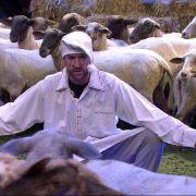 Der Wendler und die Schafe.