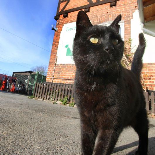Satanist kocht Katze und legt Knochen vor die Tür (Foto)