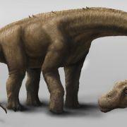 Riesensaurier hatte Gewicht einer Elefantenherde (Foto)