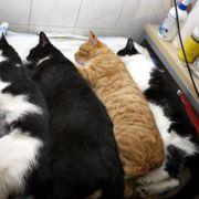 Schaurig: Polizei entdeckt 50 tote Katzen im Gefrierschrank (Foto)
