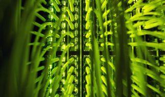Geheimdienste können direkt auf Telekom-Netz zugreifen (Foto)