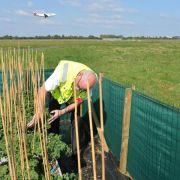 Grünkohl ermittelt Schadstoffe am Bremer Airport (Foto)