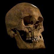 König Richard III. hatte einige lebensgefährliche Verletzungen (Foto)
