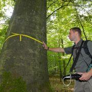 Bäume in Deutschland wachsen und altern schneller (Foto)
