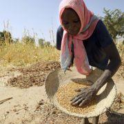 Studie: Klimawandel verringert Anzahl der Ernten (Foto)
