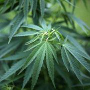 Drogen bei Jugendlichen: Nur Cannabis-Konsum steigt (Foto)