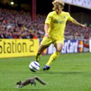 2006 musste Diego Forlan ein Eichhörnchen umdribbeln.
