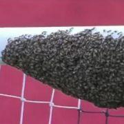 In Brasilien konnte wegen eines Bienennestes an der Torlatte das Spiel nicht angepfiffen werden. Die Feuerwehr musste gerufen werden, nach einem Flammenwerfer-Einsatz konnte das Spiel doch noch angepfiffen werden.