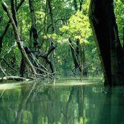 UN-Umweltschützer schlagen Alarm wegen Mangroven-Vernichtung (Foto)