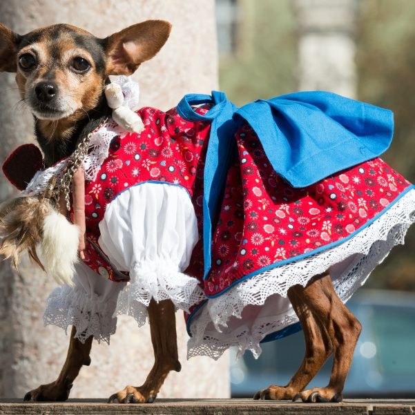 Das tragen Hund und Katz auf der Wiesn (Foto)