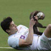Diese Tiere wurden zu fiesen Fußball-Flitzern (Foto)