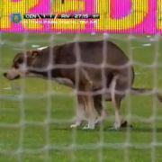 Erst 2014 besuchte ein Hund das Spiel der argentsinischen Klub River Plate und Rosario - und erledigte seine Nordurft auf dem Platz.