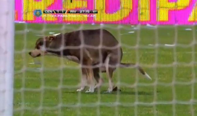 Erst 2014 besuchte ein Hund das Spiel der argentsinischen Klub River Plate und Rosario - und erledigte seine Nordurft auf dem Platz. (Foto)