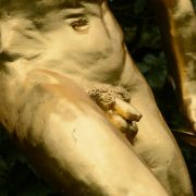 Gezüchtete Penisse aus der Petrischale (Foto)