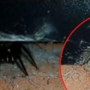 Video: Kannibalen-Spinnen terrorisieren britische Kleinstadt (Foto)