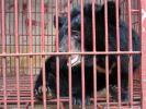 Grausame Tierquälerei auf Gallenfarm