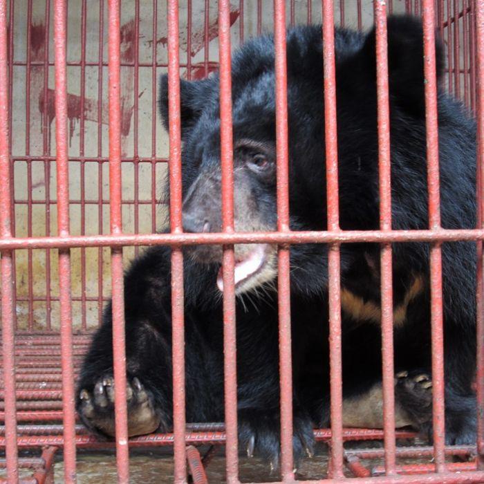 Mondbären aus Gefangenschaft befreit! (Foto)