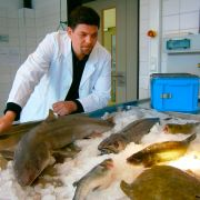 Nachgeprüft: Wie gut ist unser Fisch? (Foto)