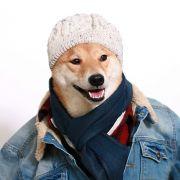 Dieser Hund macht als Männermodel Karriere (Foto)