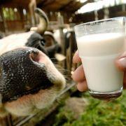 Lebensgefahr! So gefährlich ist die tägliche Milch (Foto)