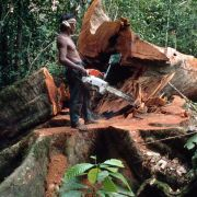 Gefährliche Affen-Malaria breitet sich unter Menschen aus (Foto)