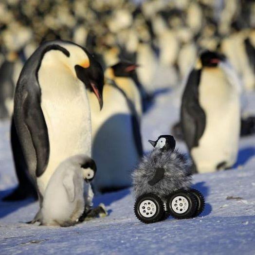Putziger Roboter-Pinguin auf Forschungstrip (Foto)
