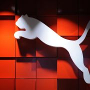 Puma sieht sich in der Spur (Foto)