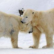 UN-Konferenz erweitert Schutz wandernder Tierarten (Foto)